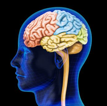 Nutrition and Brain Food